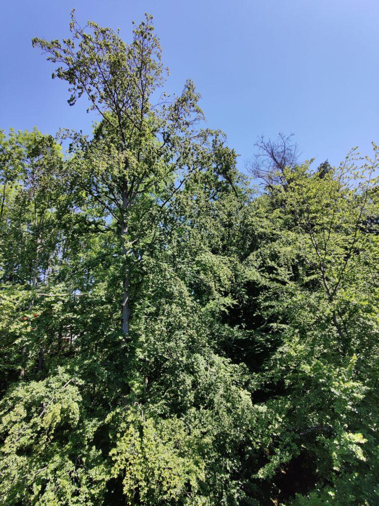 Forêt?